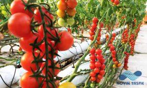 گلخانه هیدروپونیک|نوین تصفیه